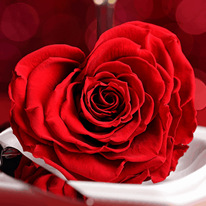 Valentine's Day- restaurant-rose